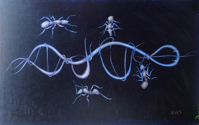 antsdna by Chad Swanson