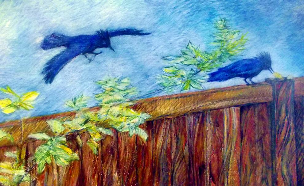 bluebirds on fence 990 (1)